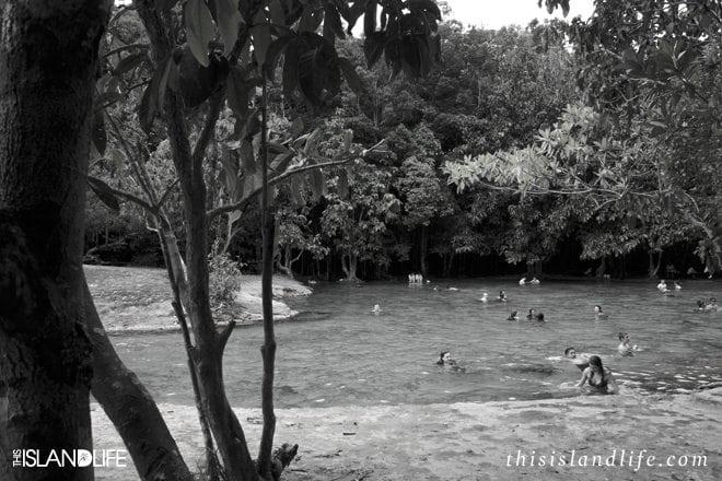 This Island Life | Emerald Pool - Krabi, Thailand