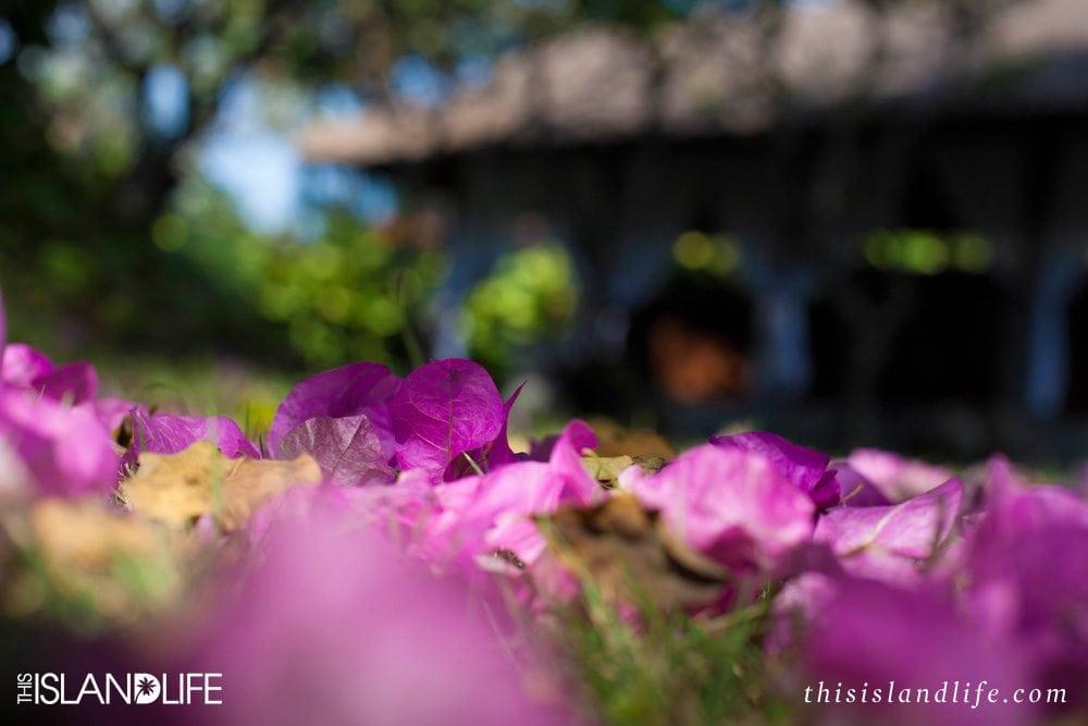 This Island Life | Fiesta time in Nueve Sandias Swimwear