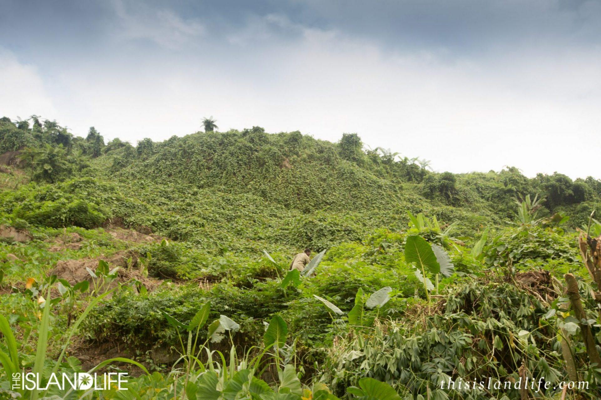 This Island Life | Michaela Skovranova | Fiji Airways
