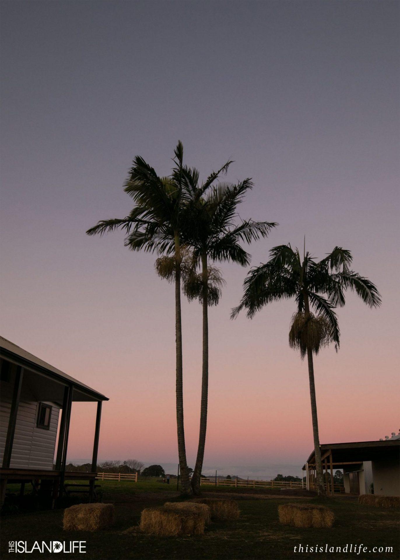 this-island-life-canon-australia-2-wm