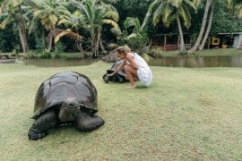 Curieuse Island and its Aldabra giant tortoises, Seychelles